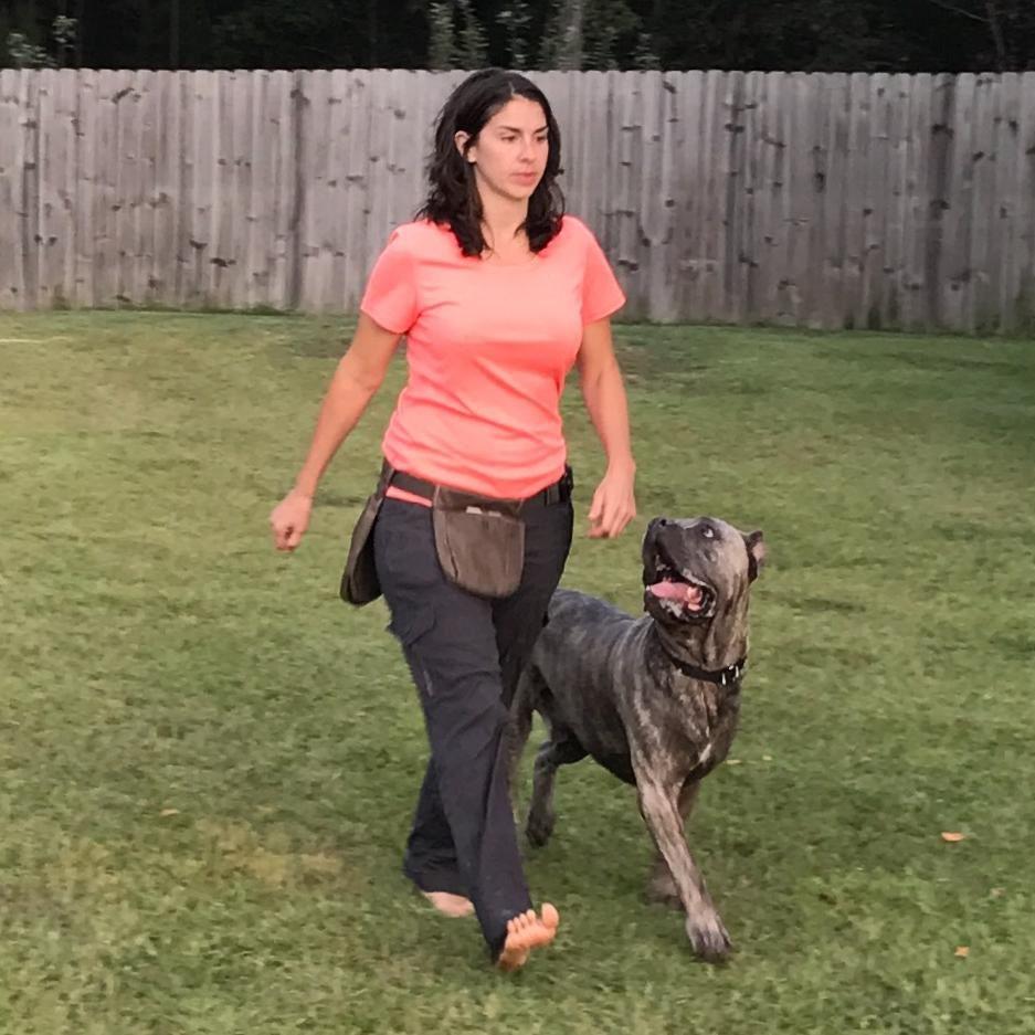 Bellona Canine Training