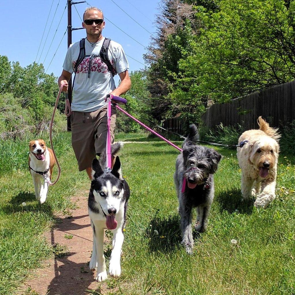 Dogs Colorado