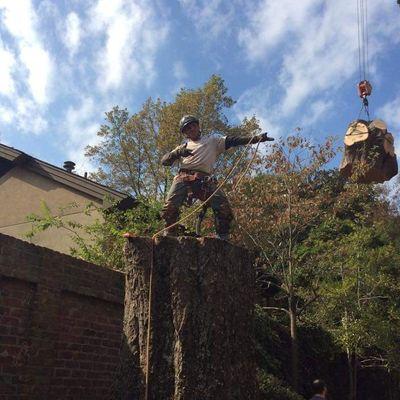 Avatar for Mickey's  Tree  Service Memphis, TN Thumbtack