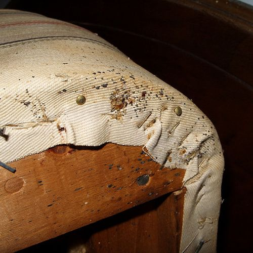 Box springs are a prime hiding spot for bed bugs.