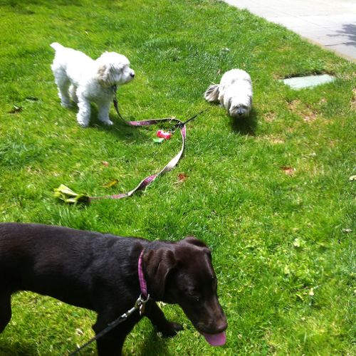 Auggie & Lychee & Clohe at Duboce Park
