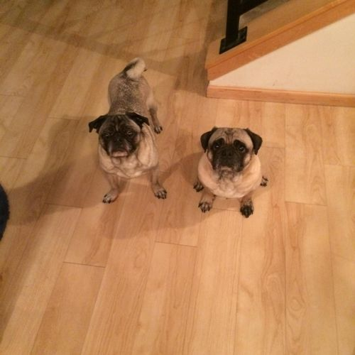 Bill and Chuy, PUG LOVE !!!