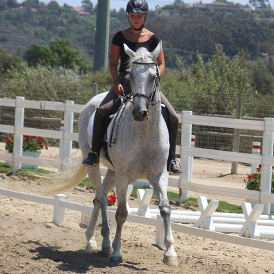 Avatar for AP Dressage Rancho Santa Fe, CA Thumbtack