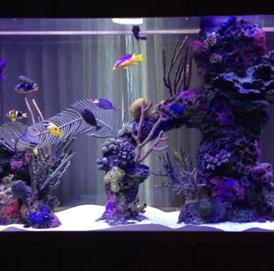 Avatar for Aquariums By James