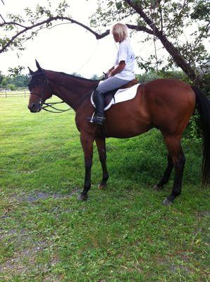 Avatar for Self Robin Tomosky Natural Horsemanship