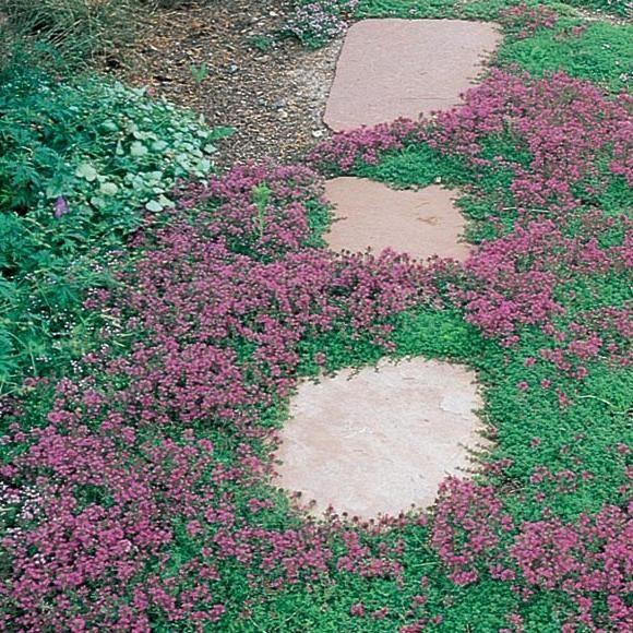 Randi Baker Landscape Design
