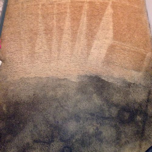 Carpet Cleaning heavy soiled carpet with pet stains, pet odor & urine.