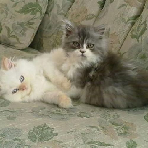 Figaro and Oliver as babies