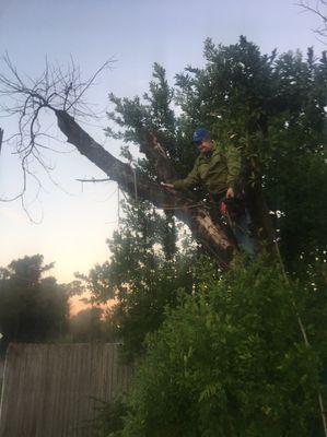Avatar for MWM Tree Service Tampa, FL Thumbtack