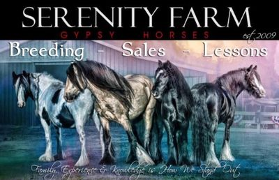 Avatar for Serenity Farm Gypsy Horses