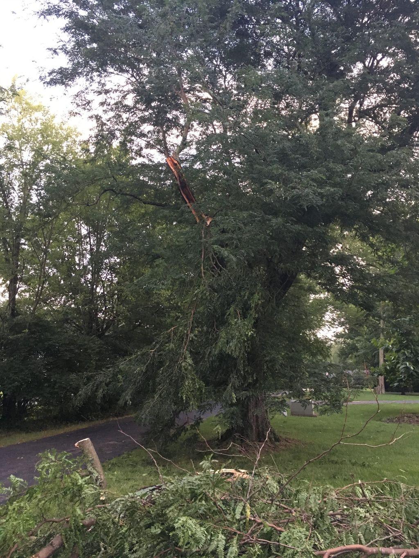 Mature Locust storm damage mitigation