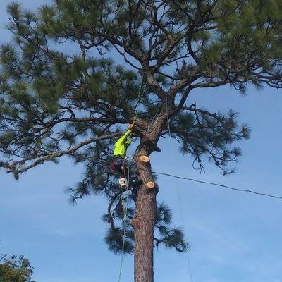 Avatar for K & T Tree Service New Port Richey, FL Thumbtack