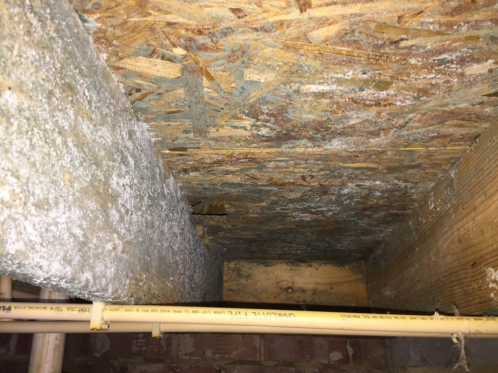 Water Damage and Mold Removal