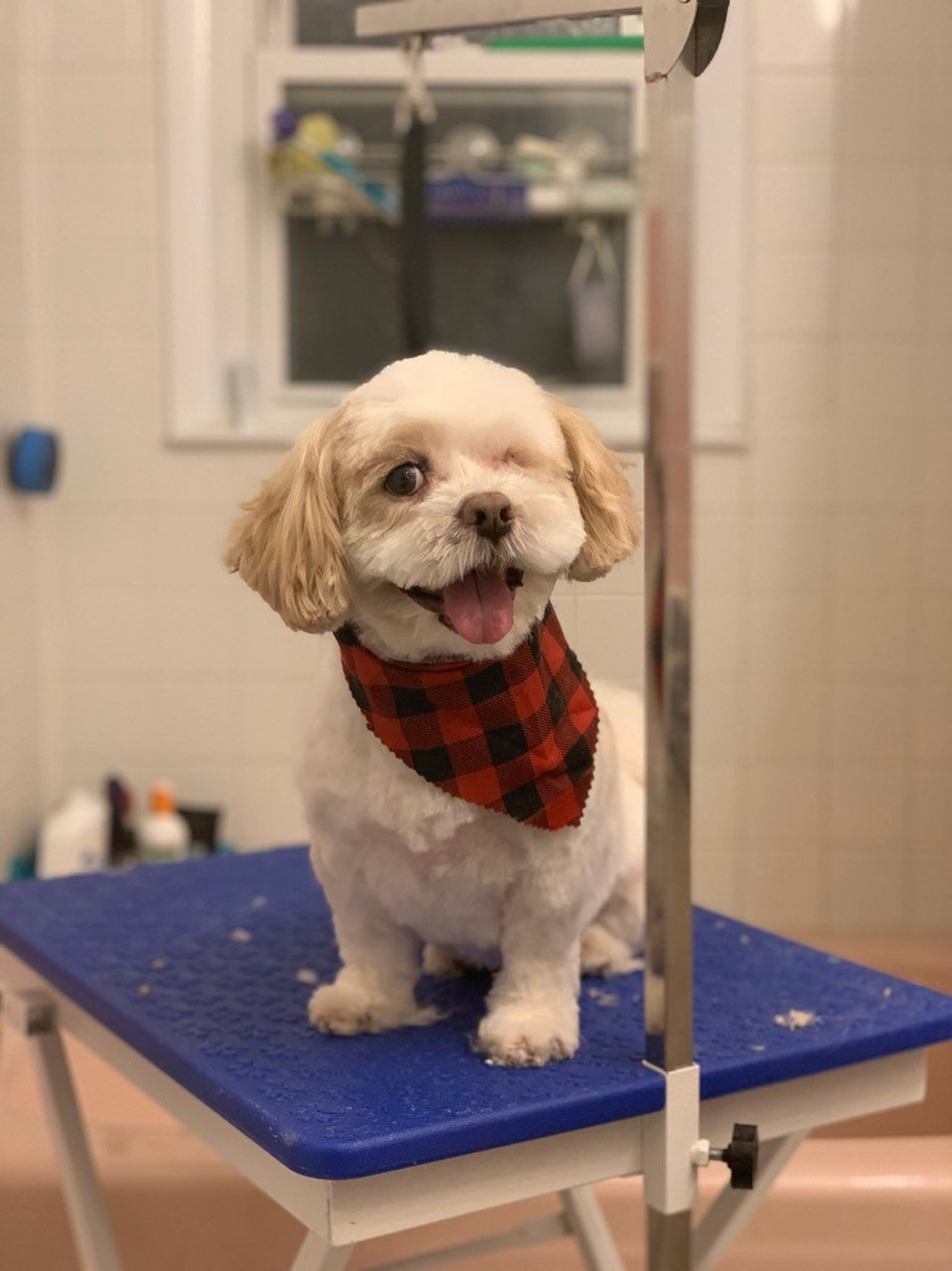 In Home Dog Grooming