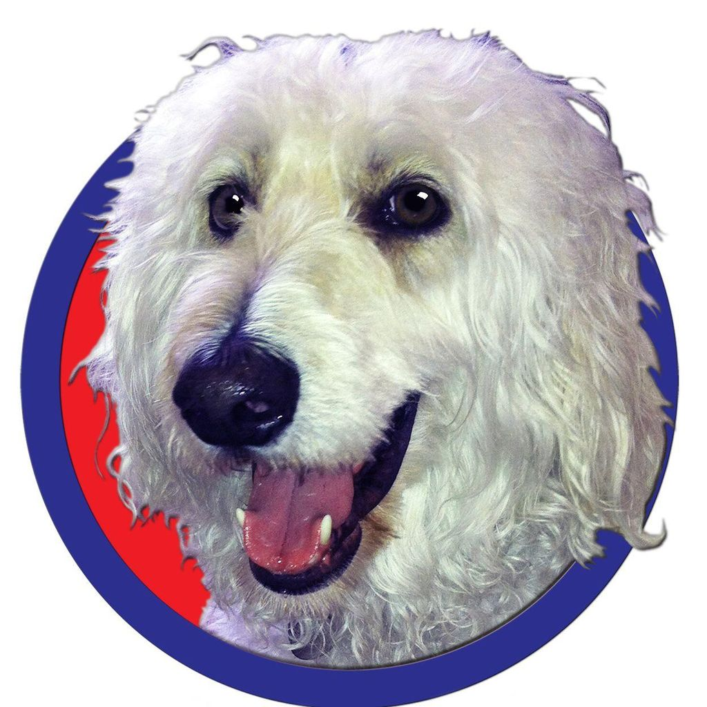 Cosmic Canine Training