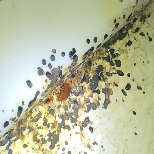 Very bad bed bugs problem. Took good cared of the job and 100% satisfied.