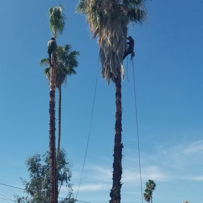 Avatar for On The Way Tree Service Sacramento, CA Thumbtack