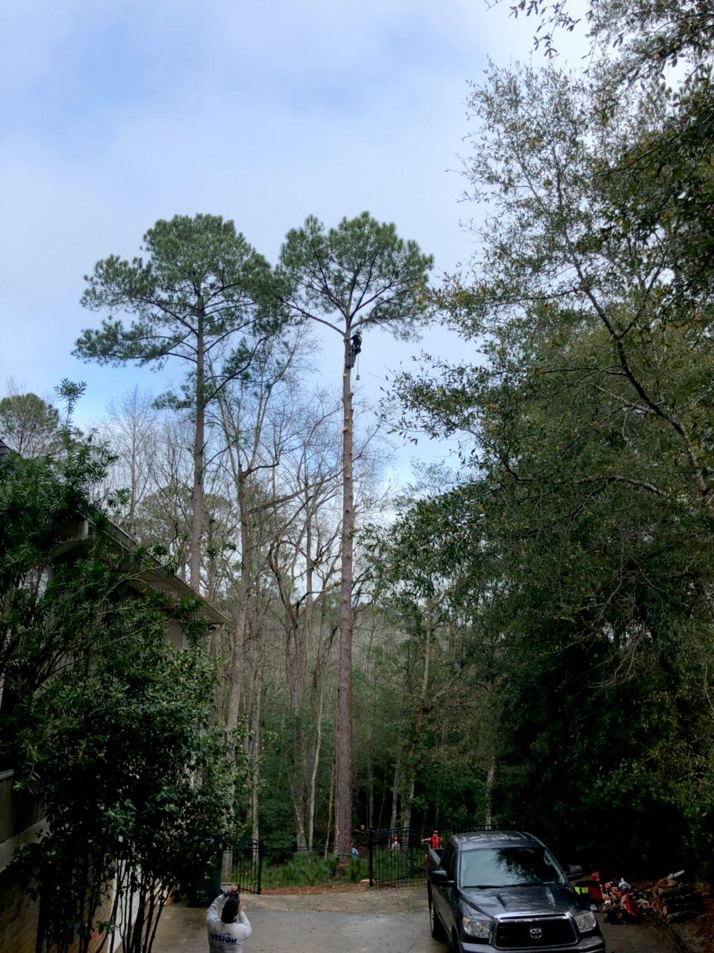 CC's Tree Service