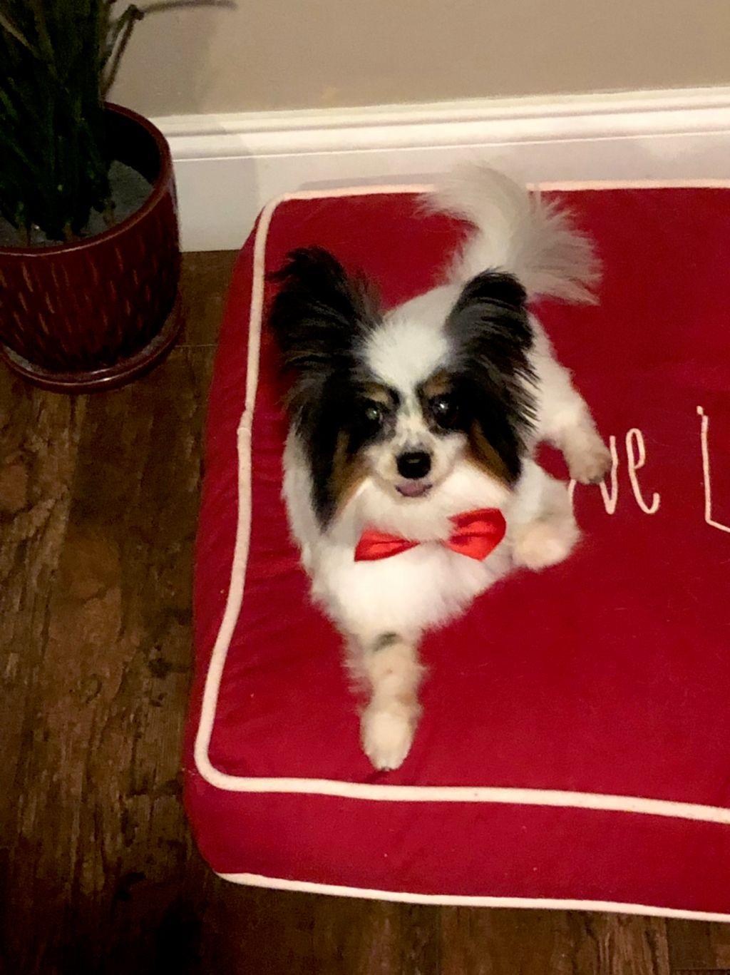 Dog Grooming - Fort Lauderdale 2019