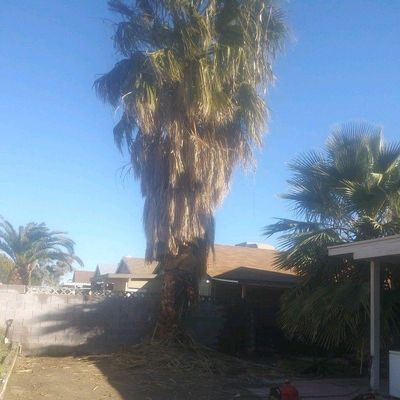 Avatar for Calderon landscape and tree Las Vegas, NV Thumbtack