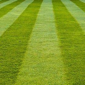 Corey's Lawn Maintenance