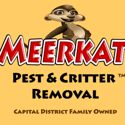 Avatar for Meerkat