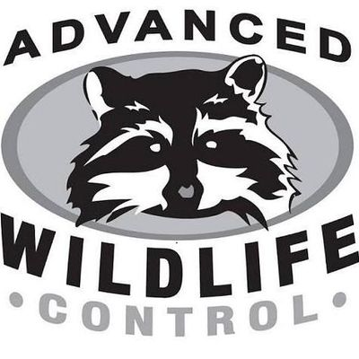 Avatar for Advanced Wildlife Control, Inc. Mequon, WI Thumbtack