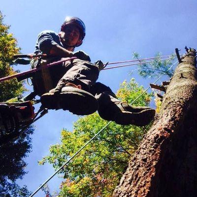 Avatar for Lloyd's Tree Service LLC