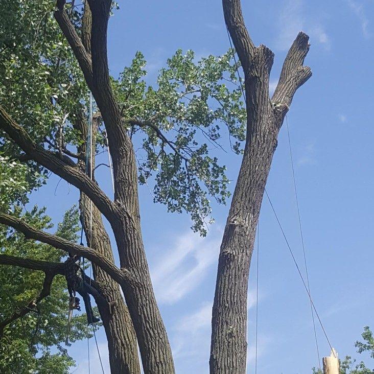German's tree Services