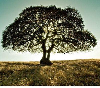Avatar for Topline tree service  & land clearing company Galt, CA Thumbtack