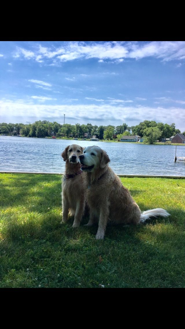 Patty's Dog Training