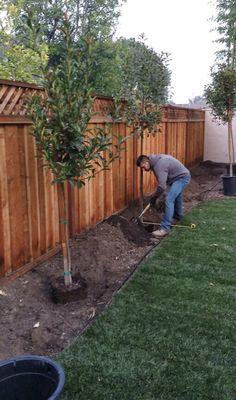Avatar for Jose Valencia Tree service and landscape