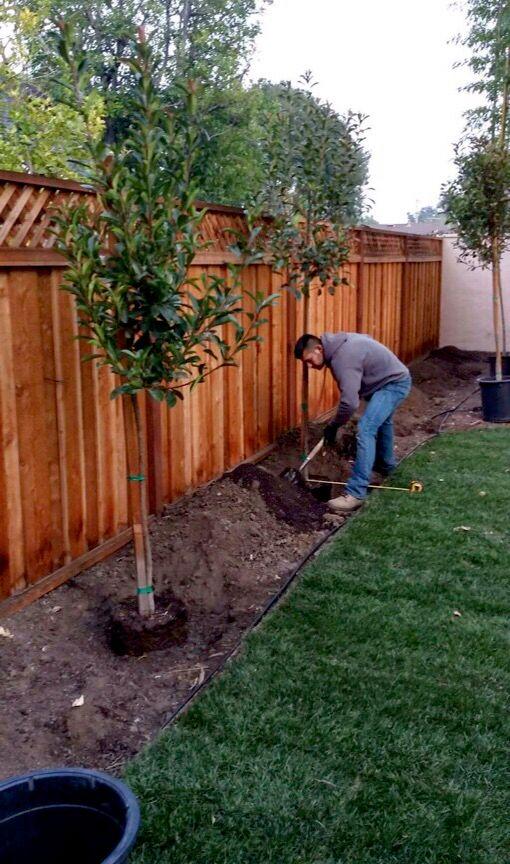 Jose Valencia Tree service and landscape