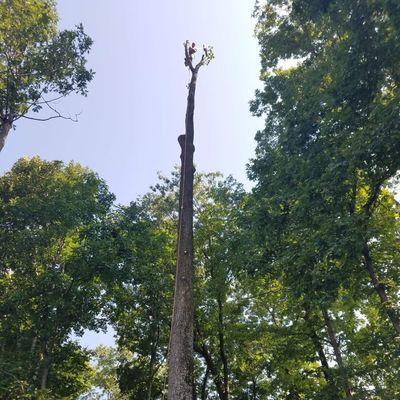 Avatar for Benitez Tree & Landscaping Llc