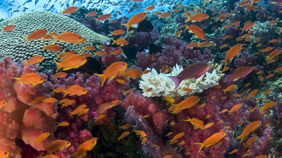 Underwater Photographer's Slides