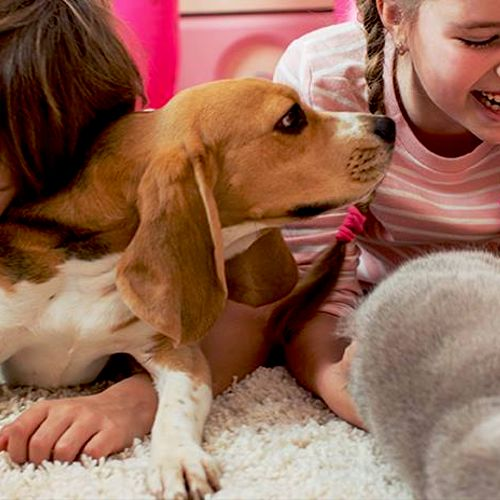 We understand that pets aren't just animals—they're part of your family. We want every member of your family to benefit from pest-free living.