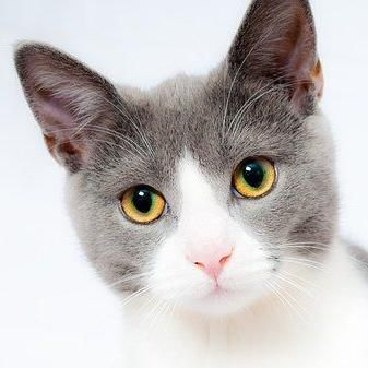 Avatar for Compassionate Pet Care