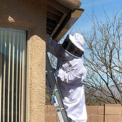 Avatar for Above and Beyond Pest Elimination LLC Tucson, AZ Thumbtack