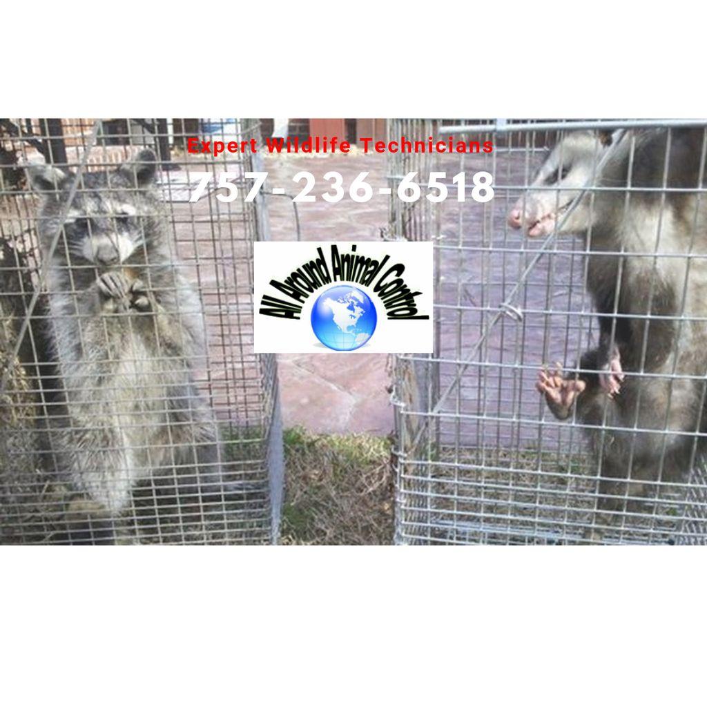 All Around Animal Control - Wildlife & Bee Control