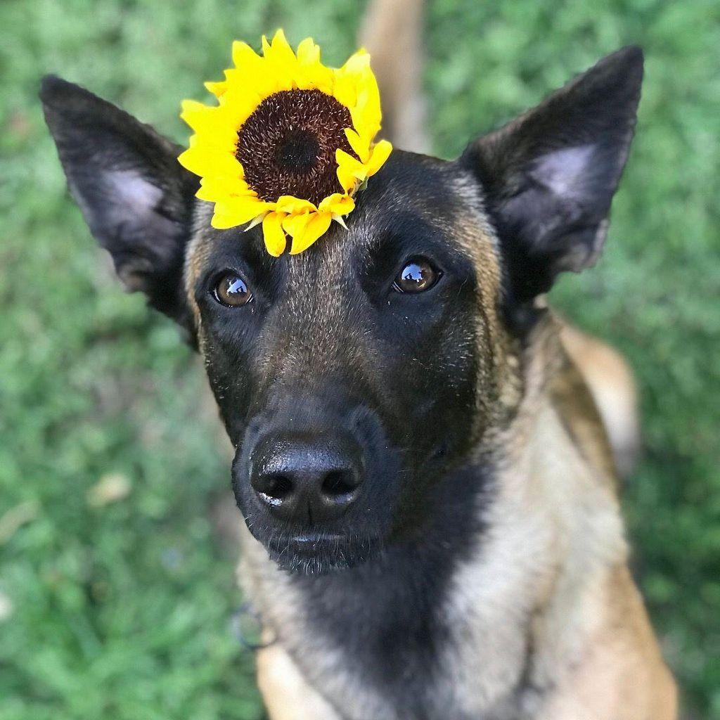 The Discerning Dog