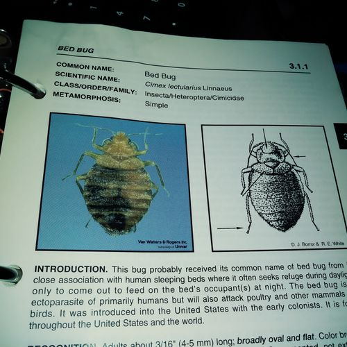 pictures of bedbugs n introduction as you can see!!