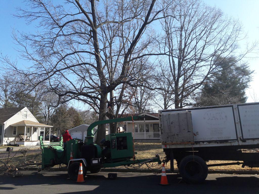Removing danger trees
