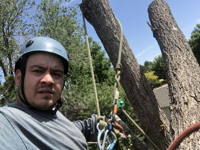 Avatar for Frontline Tree Service & Fencing Arvada, CO Thumbtack