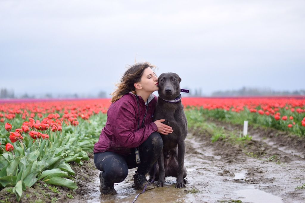 Head Up Dog Training