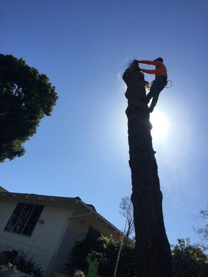 David's Tree Care