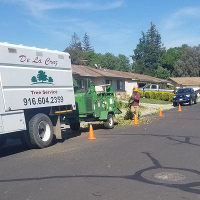 Avatar for De La Cruz Tree Service Sacramento, CA Thumbtack