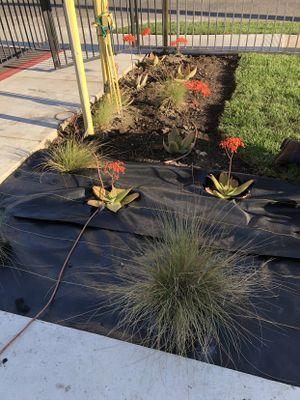 Avatar for Martinez Landscaping