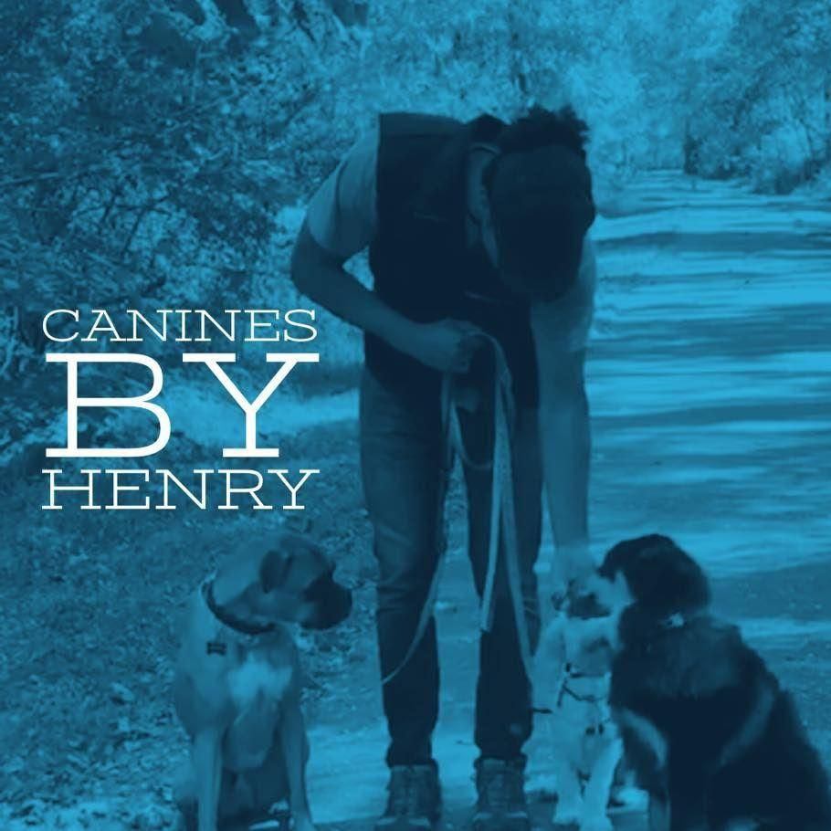 Canines By Henry