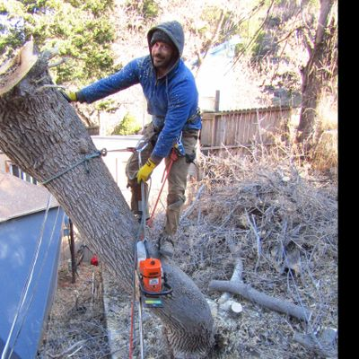 Avatar for Front Range Forestry Services, LLC Arvada, CO Thumbtack