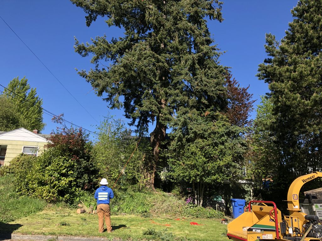 Front yard tree removal